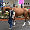 Mr Freeze - Gulfstream Park, January 24, 2020<br /> Coglianese Photos