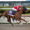 Mucho Gusto wins the 2020 Pegasus World Cup Invitational  <br /> Coglianese Photos/Ashley Blum
