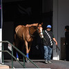 Spooky Channel schooling at Gulfstream Park, January 24, 2020<br /> Coglianese Photos