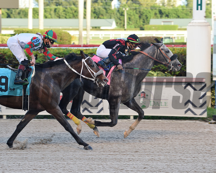 Sleepy Eyes Todd wins the Mr. Prospector Stakes Saturday, December 19, 2020 at Gulfstream Park. Photo: Coglianese Photos/Lauren King