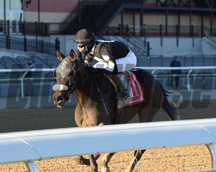Laobanonaprayer wins the New York Stallion Series Stakes Sunday, December 6, 2020 at Aqueduct. Photo: Coglianese Photos/Chelsea Durand