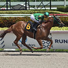 Nicholas Rose wins maiden special weight Sunday, August 30, 2020 at Gulfstream Park. Photo: Coglianese Photos/Lauren King