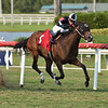 R Happy Ending - AOC, Gulfstream Park, May 8, 2020<br /> Coglianese Photos/Ryan Thompson