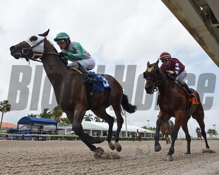 Gatsby - Maiden Win, Gulfstream Park, April 17, 2020<br /> Coglianese Photos/Ryan Thompson