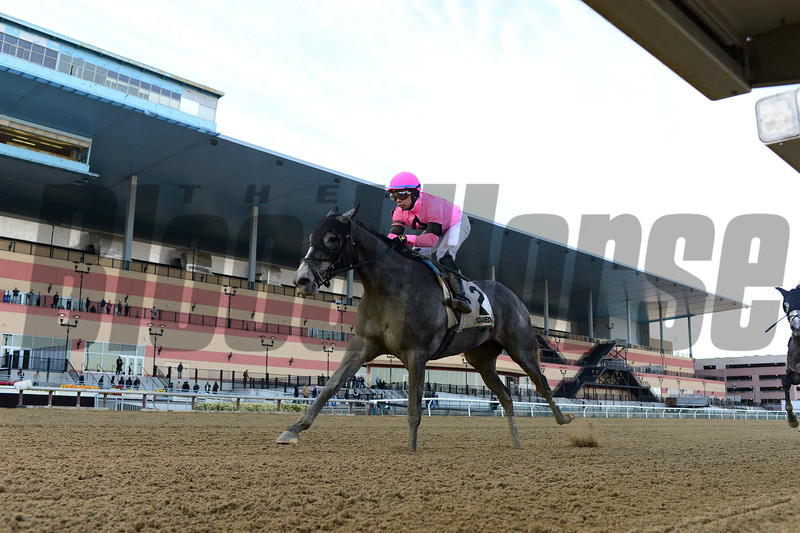 Ice Princess wins the 2020 Maddie May Stakes at Aqueduct Racetrack. Photo: Coglianese Photos
