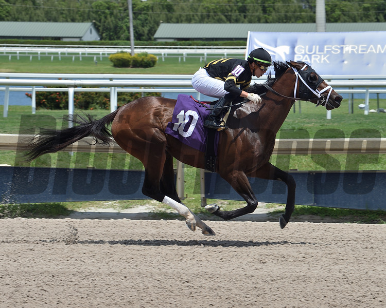 Unrighteous wins a maiden special weight Sunday, May 17, 2020 at Gulfstream Park. Photo: Coglianese Photos/Lauren King
