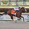 Tiz the Law wins the 2020 Florida Derby at Gulfstream Park. Photo: Coglianese Photos/Lauren King
