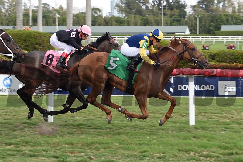 Dyna Passer wins an allowance optional claiming race at Gulfstream Park. Photo: Coglianese Photos/Lauren King