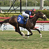 Smack - Maiden Win, Gulfstream Park, March 6, 2020<br /> Coglianese Photos/Lauren King