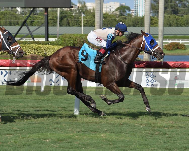 Sunsation wins an allowance optional claiming race Sunday, May 31, 2020 at Gulfstream Park. Photo: Coglianese Photos/Lauren King