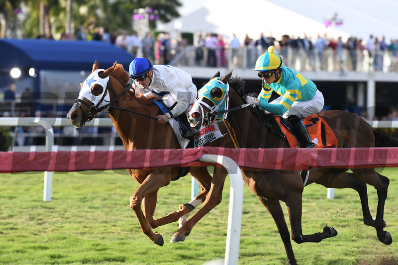 Spooky Channel wins the 2020 W. L. McKnight Stakes at Gulfstream Park<br /> Coglianese Photos/Derbe Glass