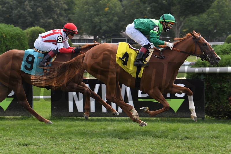 Editor At Large wins maiden special weight Monday, September 7, 2020 at Saratoga Race Course. Photo: Coglianese Photos