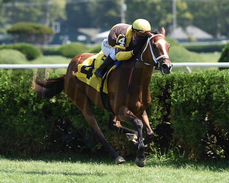 Caldee wins maiden special weight Sunday, August 23, 2020 at Saratoga Race Course. Photo: Coglianese Photos/Chelsea Durand