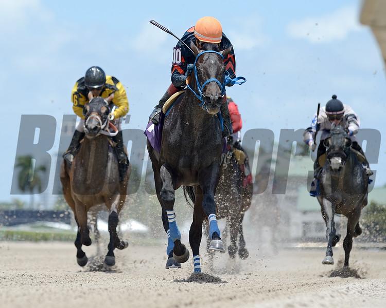 Swaggy George - Maiden Win, Gulfstream Park, May 22, 2020<br /> Coglianese Photos/Ryan Thompson