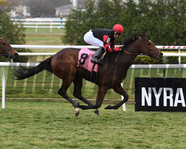 Miss Dracarys wins maiden special weight December 4, 2020 at Aqueduct. Photo: Coglianese Photos