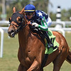 Duellist - Maiden Win, Gulfstream Park, April 4, 2020<br /> Coglianese Photos/Ryan Thompson
