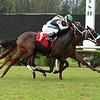 Halcyon Digest - Maiden Win, Gulfstream Park West, October 12, 2020<br /> Coglianese Photos/Lauren King