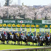 Racing Scene at Nakayama Racecourse March 22, 2020. Photo: Naoji Inada