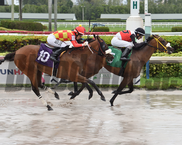 Days of Spring wins a starter optional claiming race Sunday, May 24, 2020 at Gulfstream Park. Photo: Coglianese Photos/Lauren King