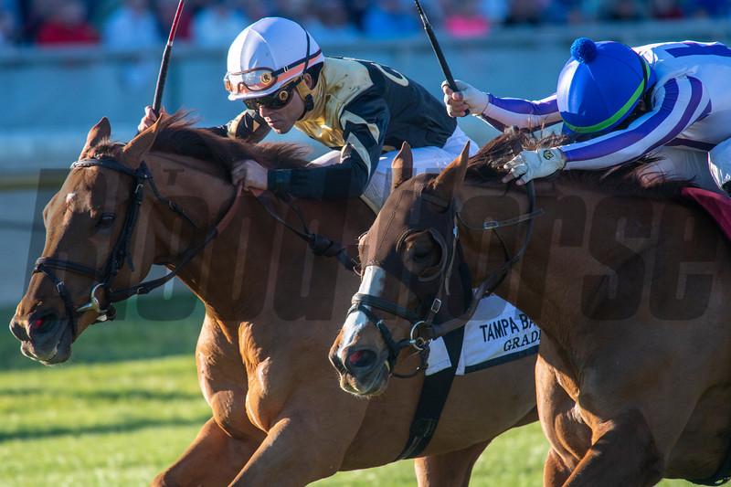 Admiralty Pier wins 2020 Tampa Bay Stakes at Tampa Bay Downs. Photo: Joe DiOrio