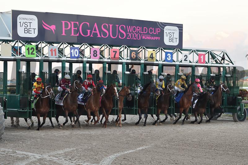 Mucho Gusto wins 2020 Pegasus World Cup Invitational at Gulfstream Park. Photo: Coglianese Photos/Lauren King