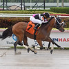 Where Paradise Lay wins a claiming race Saturday, April 18, 2020 at Gulfstream Park. Photo: Coglianese Photos/Lauren King