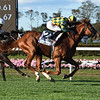 Gufo wins the 2020 Belmont Derby Invitational<br /> Coglianese Photos