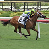 Fuddled - Maiden Win, Gulfstream Park, July 1, 2020<br /> Coglianese Photos/Lauren King