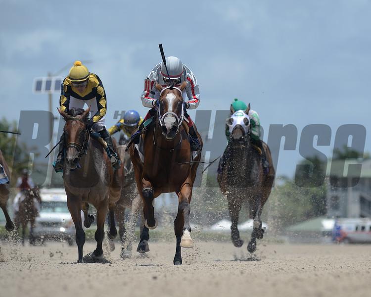 Hot Blooded - Maiden Win, Gulfstream Park, July 24, 2020<br /> Coglianese Photos/Ryan Thompson