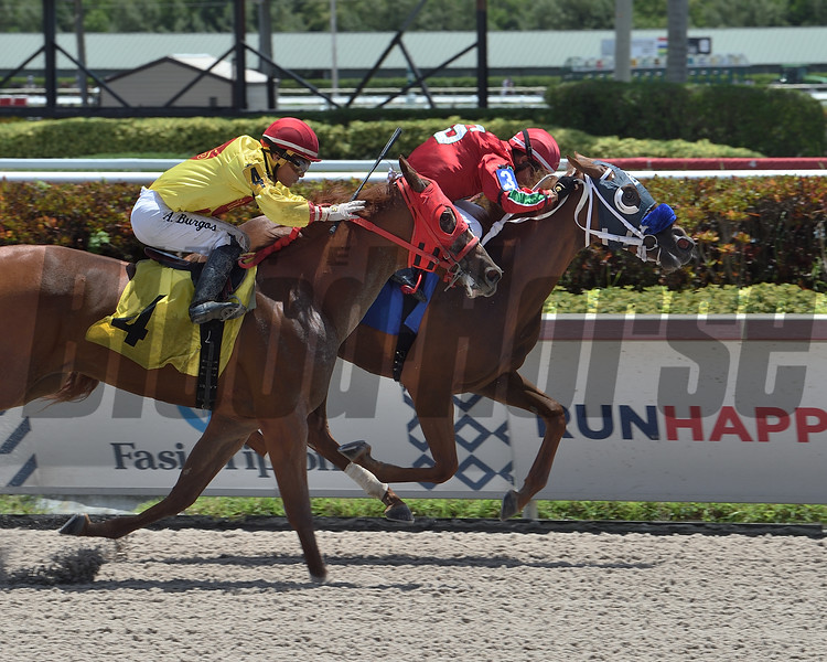 Special Inclusion wins maiden claiming race July 8, 2020 at Gulfstream Park. Photo: Coglianese Photos/Lauren KIng