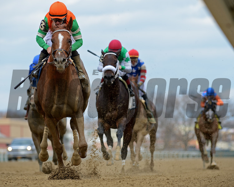 Forza Di Oro wins the Discovery Stakes at Aqueduct<br /> Coglianese Photos