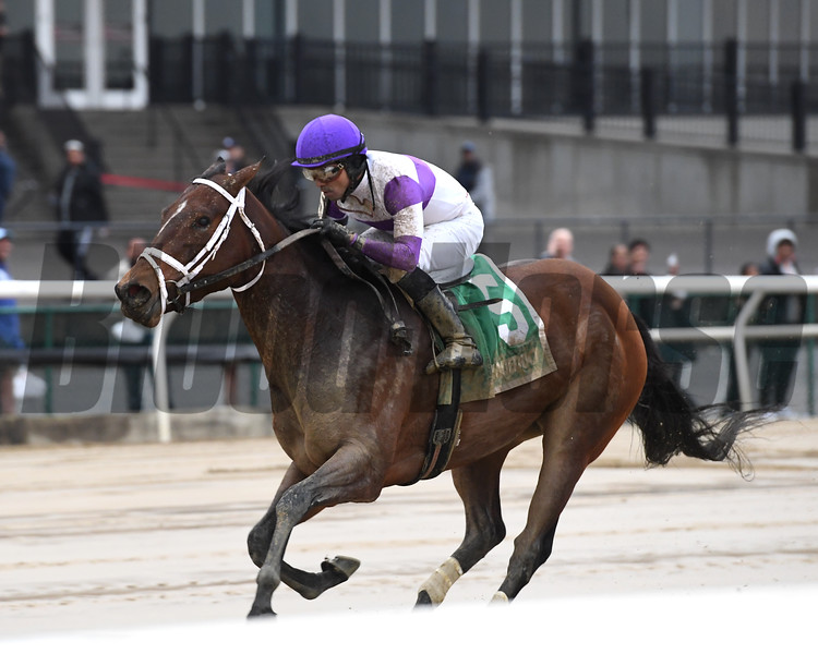Cash Offer wins the 2020 La Verdad Stakes at Aqueduct<br /> Coglianese Photos/Elsa Lorieul