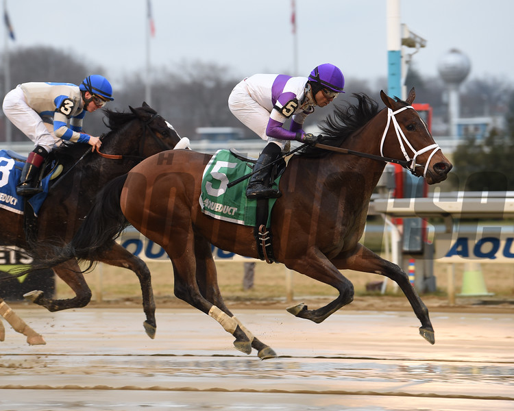 Cash Offer wins the 2020 La Verdad Stakes at Aqueduct<br /> Coglianese Photos
