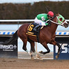 Mischevious Alex wins the 2020 Gotham Stakes at Aqueduct<br /> Coglianese Photos