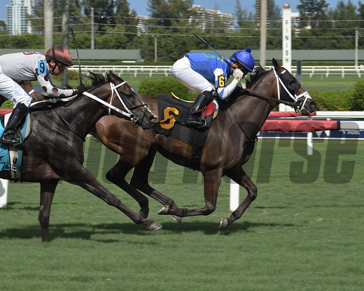 Tizzarunner - AOC, Gulfstream Park, August 6, 2020<br /> Coglianese Photos/Lauren King