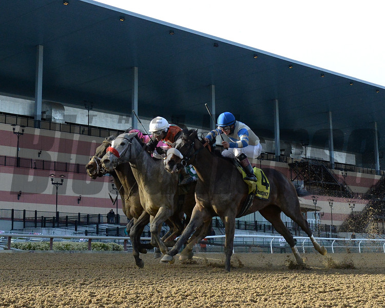 Piedi Bianchi wins the 2020 Correction Stakes at Aqueduct.<br /> Coglianese Photos/Chelsea Durand