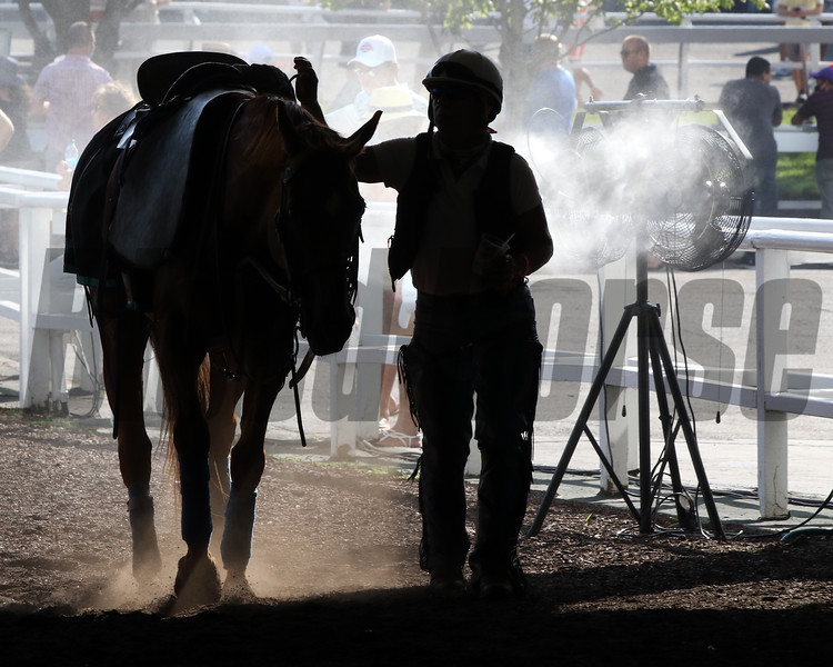 A horse cooling off at Monmouth Park on July 18, 2020. Photo By: Chad B. Harmon
