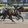 Identifier wins the 2020 Hal's Hope Stakes at Gulfstream Park<br /> Coglianese Photos/Lauren King