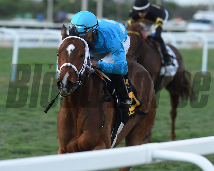 Starship Jubilee wins the 2020 Suwannee River at Gulfstream Park. Photo: Coglianese Photos/Ryan Thompson