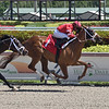 Cajun Brother - Maiden Win, Gulfstream Park, March 14, 2020<br /> Coglianese Photos/Lauren King