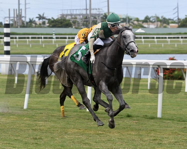 Meadow Beauty - Maiden Win, Gulfstream Park, June 12, 2020<br /> Coglianese Photos/Ryan Thompson