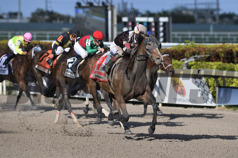 Pink Sands wins the 2020 Inside Information Stakes at Gulfstream Park      <br /> Coglianese Photos/Zoe Metz
