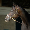 Caption: standing in shedrow<br /> Midnight Bisou at Keeneland on May 2, 2020 Keeneland in Lexington, KY.