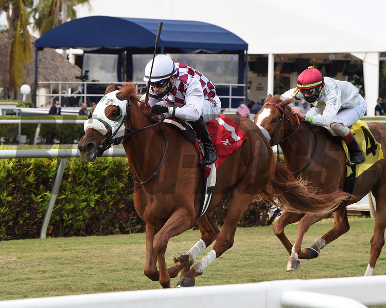 Niko's Dream wins the 2020 My Charmer Stakes at Gulfstream Park<br /> Coglianese Photos/Ryan Thompson