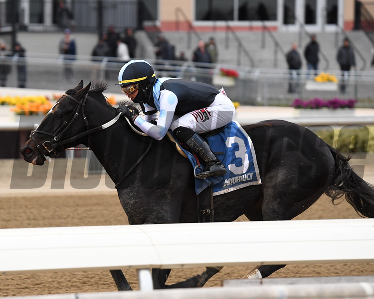 Independence Hall wins the 2020 Jerome at Aqueduct<br /> Coglianese Photos/Joe Labozzetta