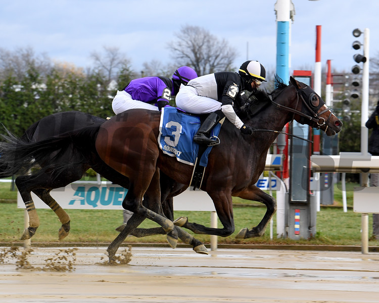 Sharp Starr wins the 2020 Go for Wand Handicap at Aqueduct<br /> Coglianese Photos/Susie Raisher