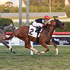 Lady Panda - Maiden Win, Gulfstream Park, March 6, 2020<br /> Coglianese Photos/Lauren King