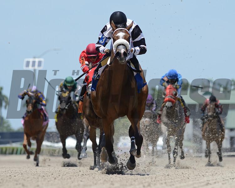 Princess Secret - Maiden Win, Gulfstream Park, May 7, 2020  <br /> Coglianese Photos/Ryan Thompson
