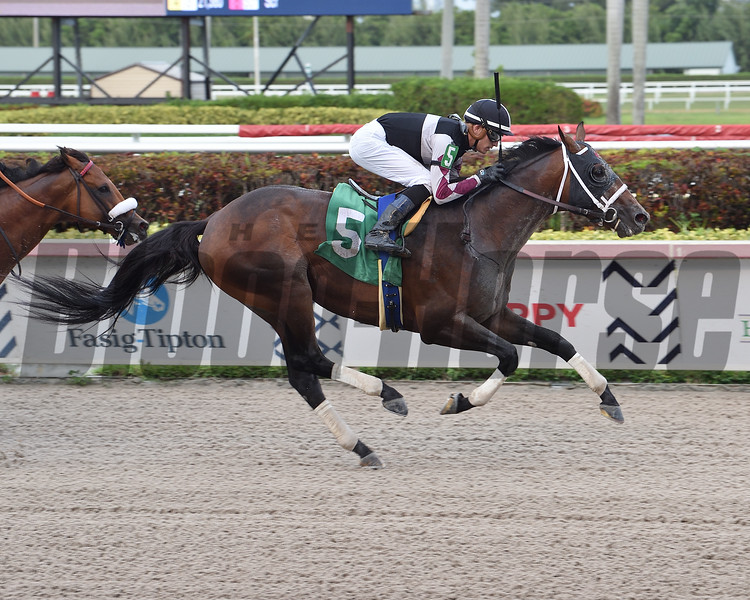 Global Campaign wins an allowance optional claiming race Saturday, April 25, 2020 at Gulfstream Park. Photo: Coglianese Photos/Lauren King