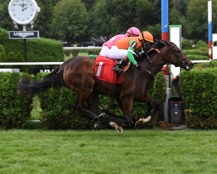 Ingrassia - Maiden Win, Saratoga, August 19, 2020<br /> Coglianese Photos